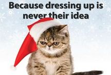 Holiday Pet Favorites / What does your pet want from Santa Claws this year? Some great holiday gift ideas.  / by PetMeds