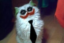 Kittah Cats / by Rachel Younts