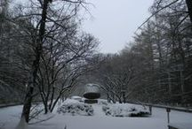 Winter Wonderland  / Discover what UAlbany is like in the winter! / by University at Albany, SUNY
