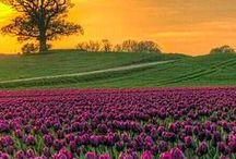 !!!!!FIELDS OF FLOWERS / ♡♡ / by Joanne Boor