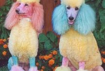 Pup Ideas... / by abigail*ryan