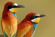 Birds / by Carla Chagas