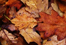 Chestnut and Maple / by Liz Lawrence
