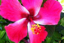 Everything Hawaiian / by Nadia Calzaretta