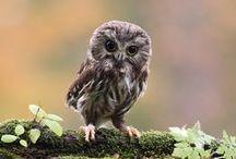 Hooty Hoooo / Wise ol Owls <3 / by V Marie Auletti
