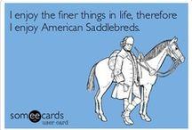 Horses / by Carey the equuscholar