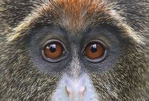 Animals / by Blue Eyed Night Owl