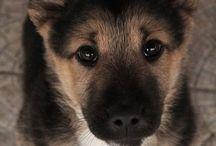 pups / by Krystal Campos