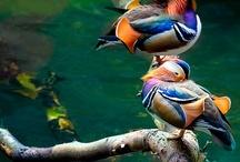 Birds / by Anjay Reed
