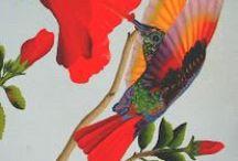 hummingbirds / by deb brown