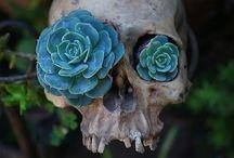 botanical's and garden dreams / by Robin Dixon