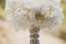 favorites / White peonies / by Lydia Barber