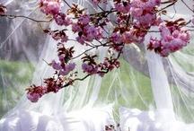 Garden/Backyard / by Elizabeth Aftanas
