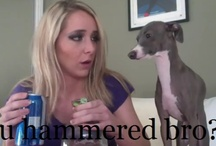 jenna marbles appreciation:) / by Jamie Yates