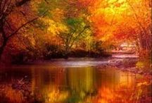 Autumn / by Granny Grue