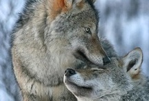 Dogs, Puppies, Wolves & Foxes / by Marianne Curley
