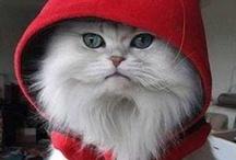 Mininos / Kitty Cats / by Cristy