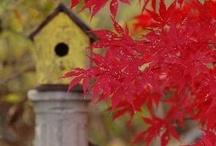 Autumn / by Lisa Blackburn