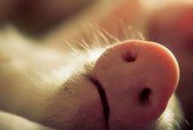 Animals <3 / by Rebecca Lenegar