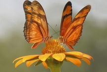 Butterflies & Moths / by Sally Ritter