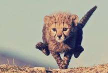 Animal cuteness  / by Priscilla Stephens
