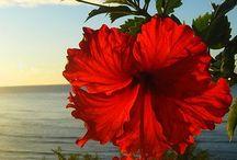 Puerto Rico / Island Get Away / by Raquel Santiago Stringham