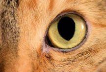 Cat / by Sue Aylesbury