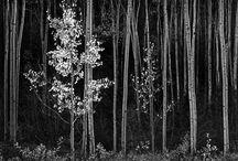 Photo inspirations / by Deborah Rockwell Franco