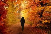 Fall/Autumn - Nostalgia / by Kelly Worthington-Hardy