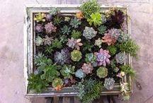 Gardening / by Eva May