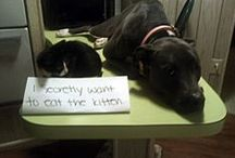 Dog Shaming / by Vic Oliver