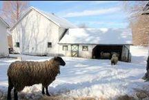 farm / by Erin Bigler- The Almost Homestead