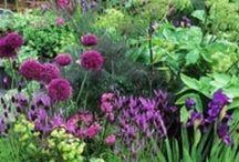 Growing Herbs / by Lori Parker