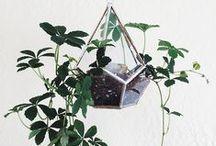 Plants / by Leila Badsha