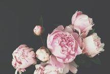 Floral / Flowers  / by Leila Badsha