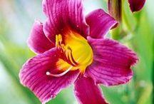 Plants in my garden / by Pat Cramer Kennedy