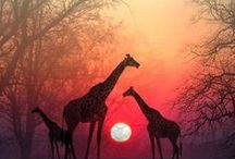 Beautiful / by Brittany Kozitza