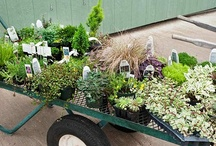 Gardening / Gardening info for the Pacific Northwest and coastal regions. Dennis Company staff is always available to answer questions and help with your gardening needs.  / by Denise Duck