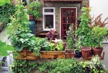 urban garden / by Gwendolen Elliott