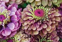 Garden dreams / by Jeanette Thompson