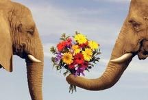 Elephants / by Martha Ball