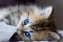 kitties / by Cindy Gelinas