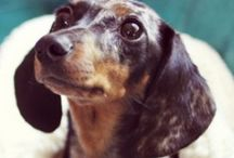 Doxies are the Best / by Christy Spence