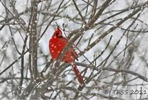 Winter 2012 / by GMC DESIGNS
