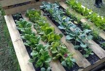 Gardening and yard ideas / by Megan Sprague