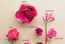 Flowers / by Kelly R. Klug