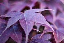 colors : purple mist / by Dalay Lapa