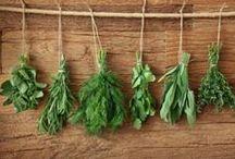 DIY Herb Garden / DIY Herb Garden / by DIY BOARDS