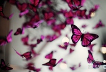 Butterfly Theme / by Mazelmoments.com