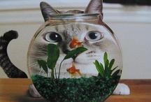 Meowwwww!!! / by SueEllen Buchanan